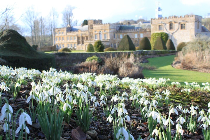 Forde Abbey snowdrops from the Park Garden