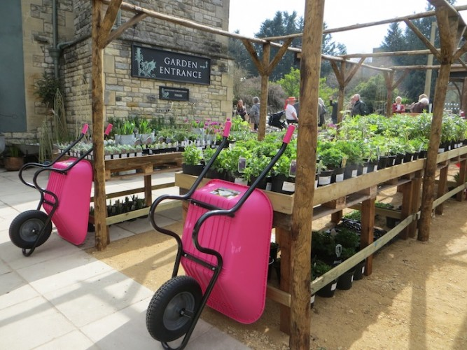 Four flamingos and a new garden nursery Somerset
