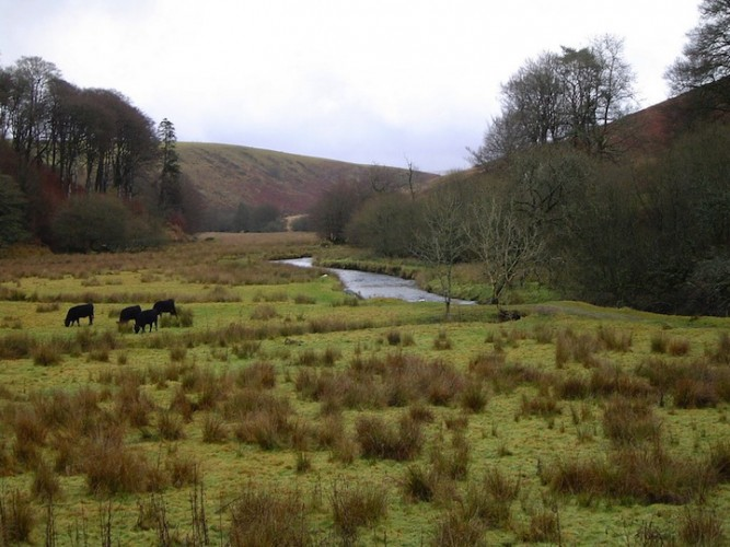 The_River_Barle_at_Simonsbath,_Exmoor_-_geograph.org.uk_-_1754208