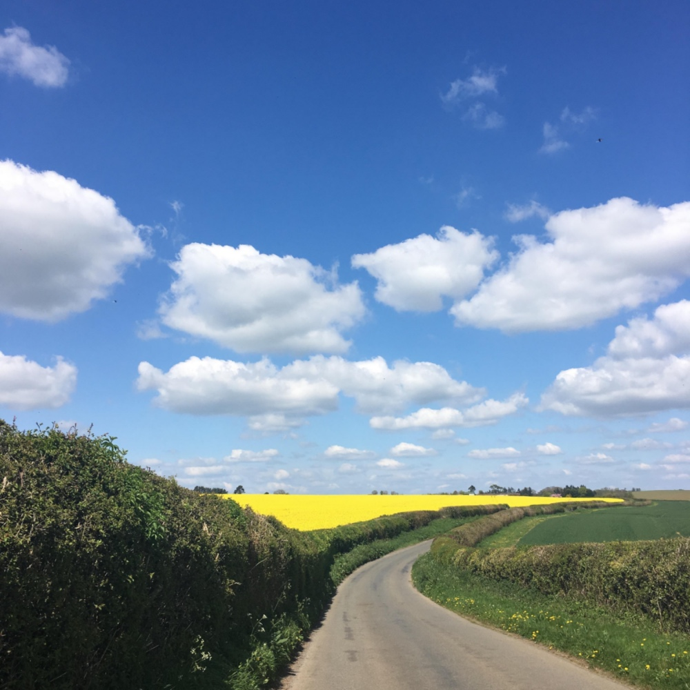 country yellow rapeseed field lane