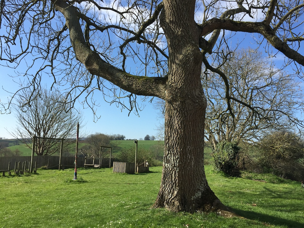 field with tree and climbing frames
